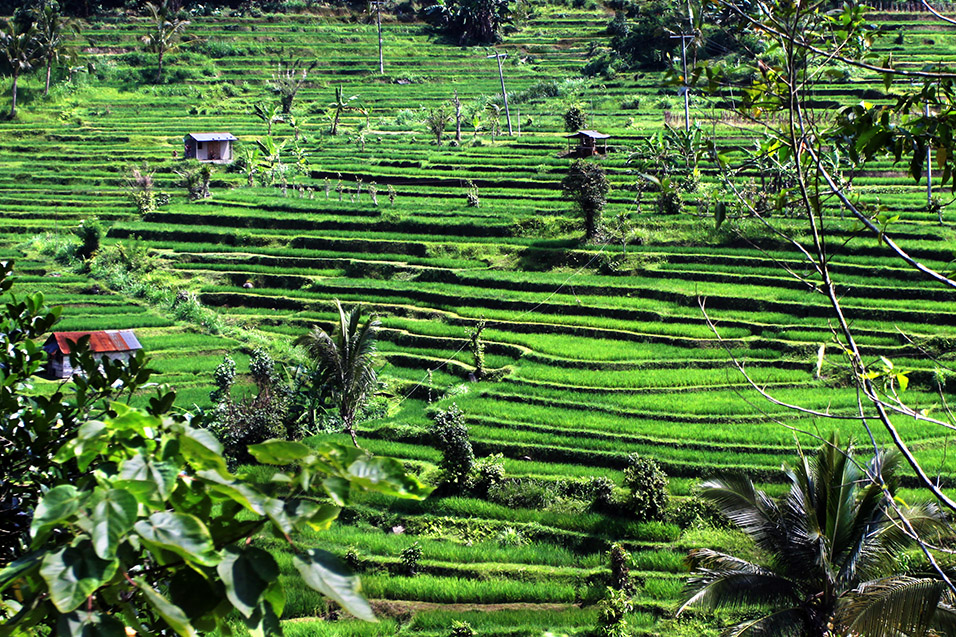 indonesia/jatiluwih_rice_terraces_full_view