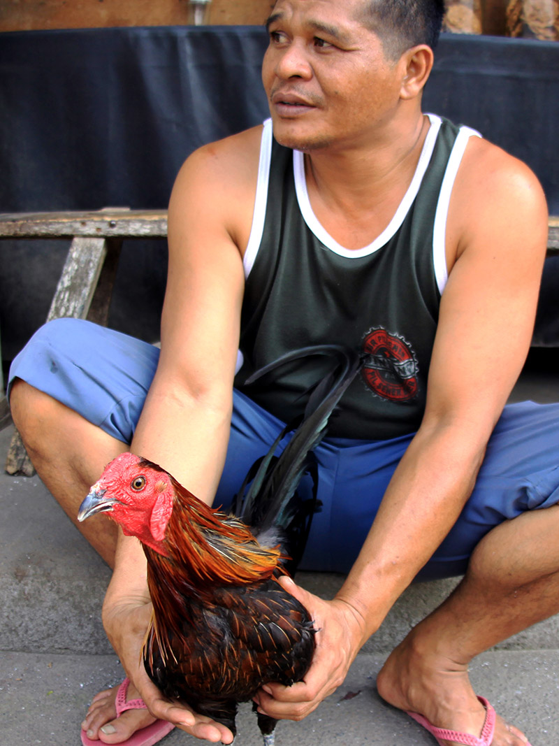 indonesia/ubud_rooster_man