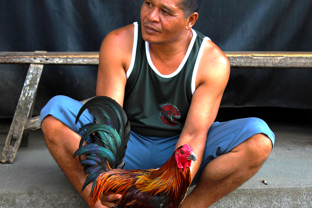 indonesia/ubud_rooster_man_2