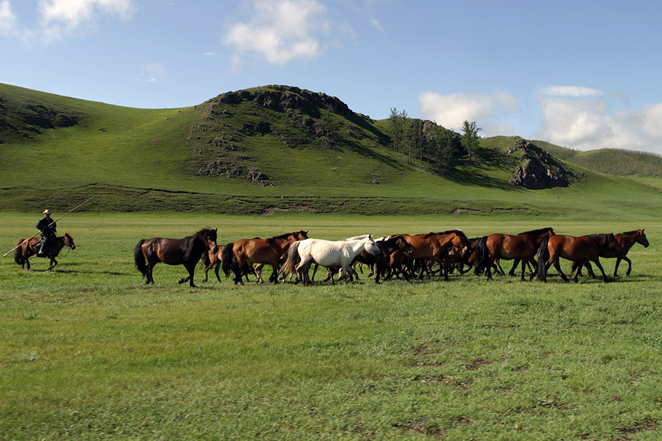 mongolia/countryside_horse_herder_2