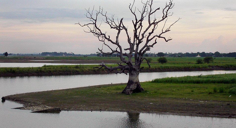 myanmar/mandalay_dusk_tree_branches