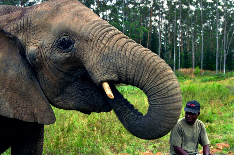 south_africa/elephants_eating