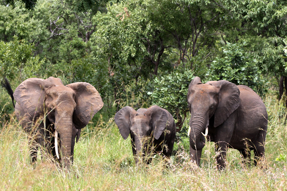 tanzania/2010/mikumi_elephants_outside