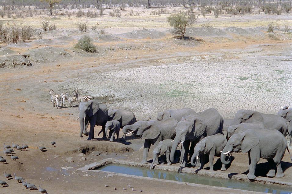 Masuma Dam, Hwange National Park, Zimbabwe Travel Photos