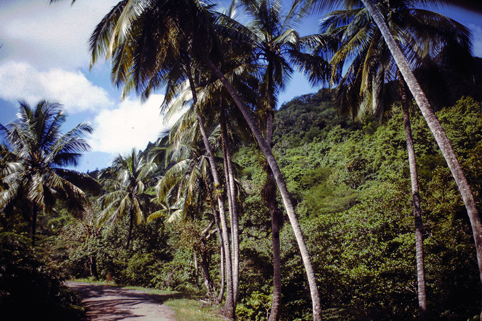 antigua/antigua_palm_jungle
