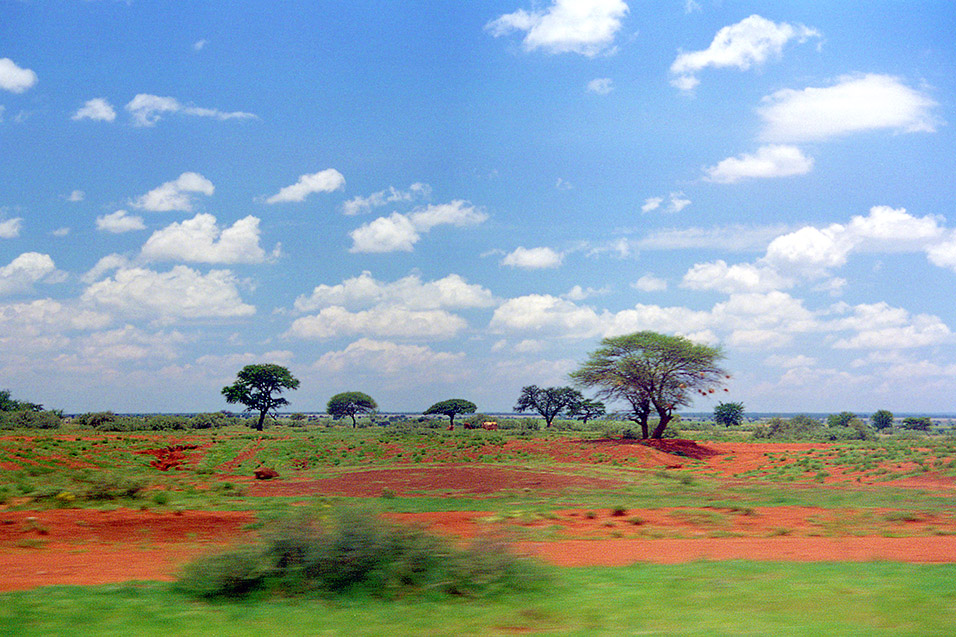 botswana/kalahari_moving