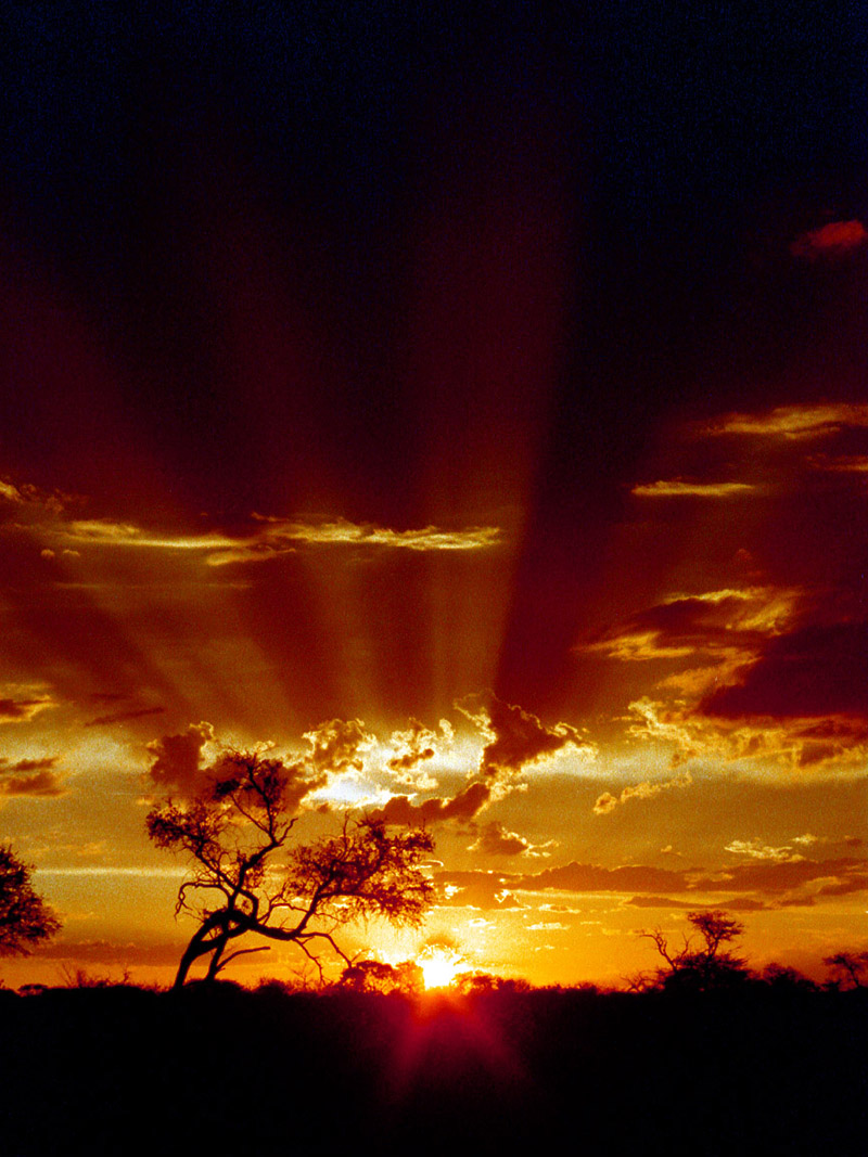 botswana/sunset_vertical