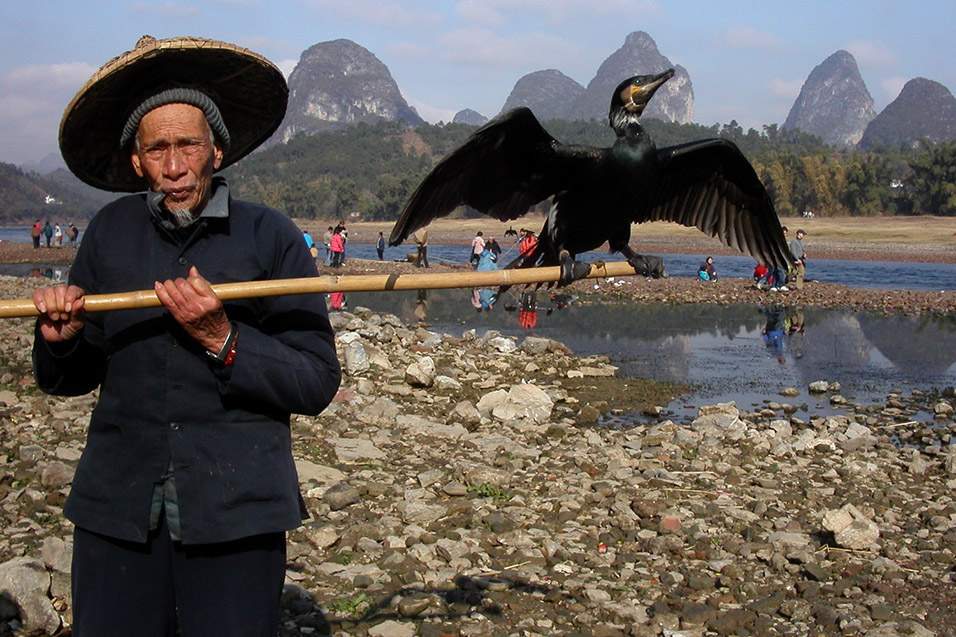 china/2004/yangshuo_fisherman_comorant