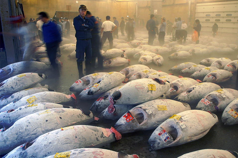 japan/2007/tsukiji_fish_market_1