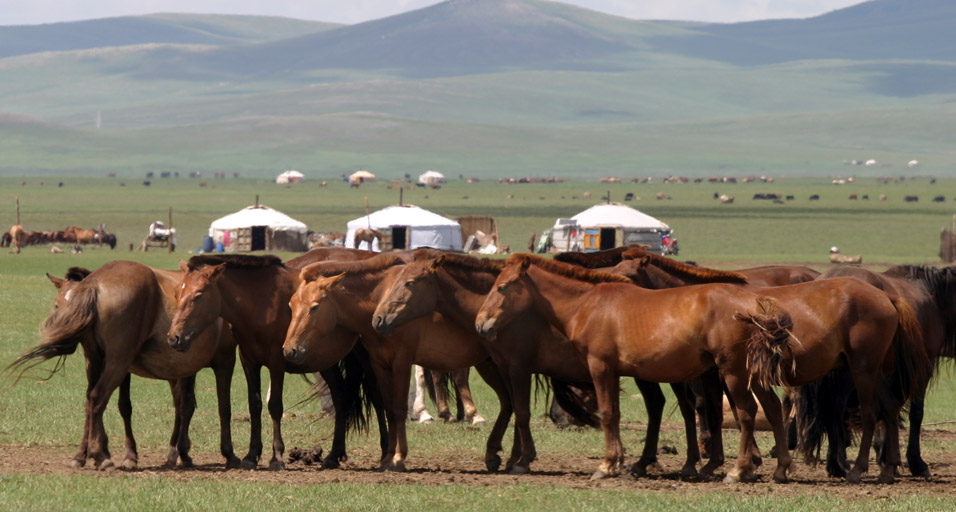 mongolia/countryside_horses_gers