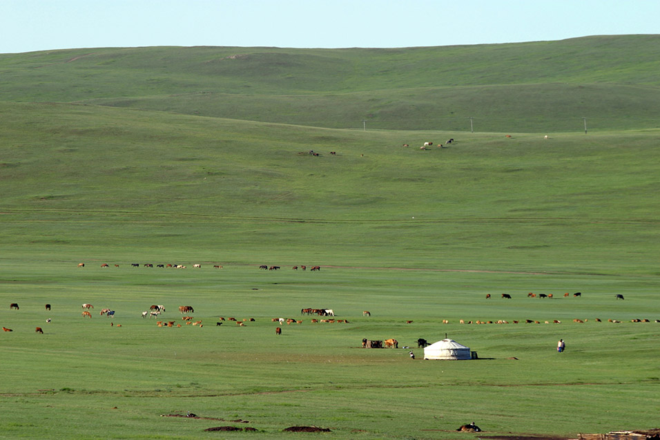 mongolia/train_ger_horse_view