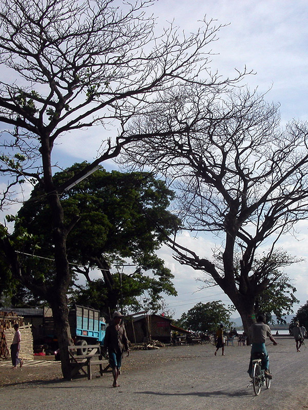 myanmar/mandalay_branches_trees