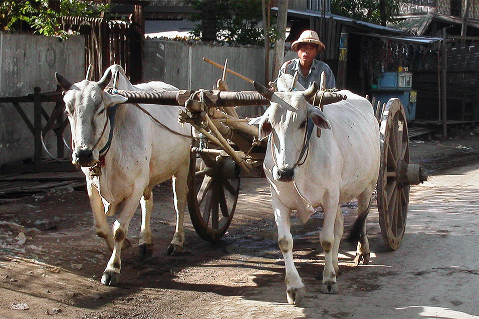 myanmar/mandalay_ox_cart