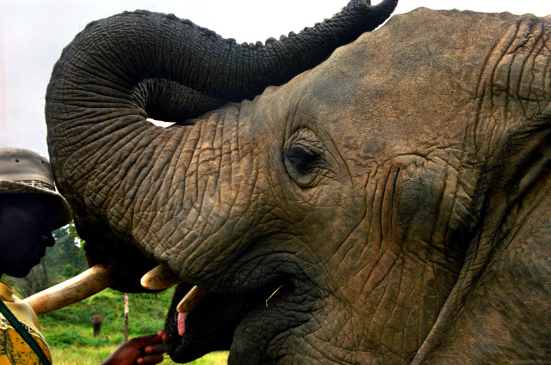 south_africa/elephant_african_feeding