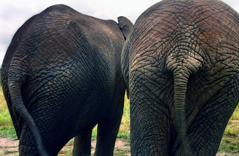 south_africa/elephants_behind