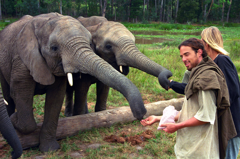 south_africa/elephants_marieke_feeding