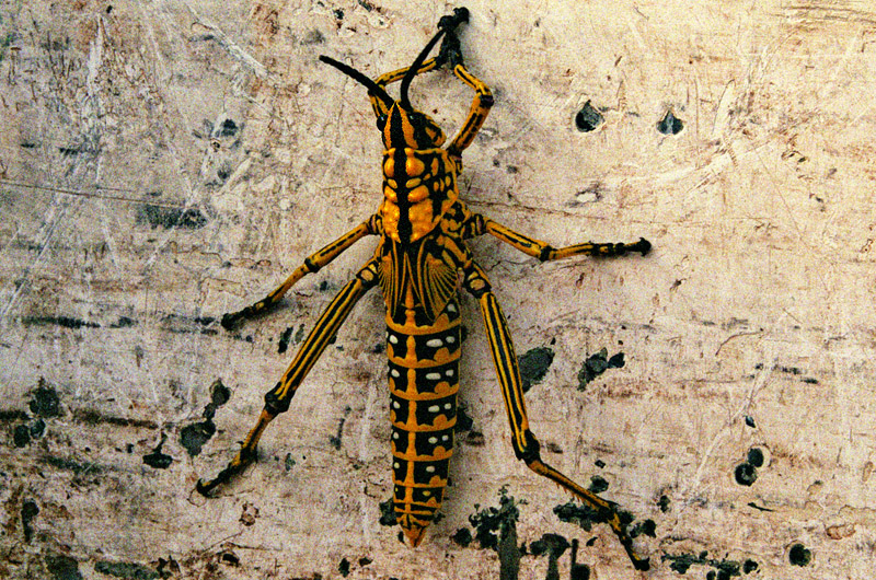 south_africa/orange_river_insect