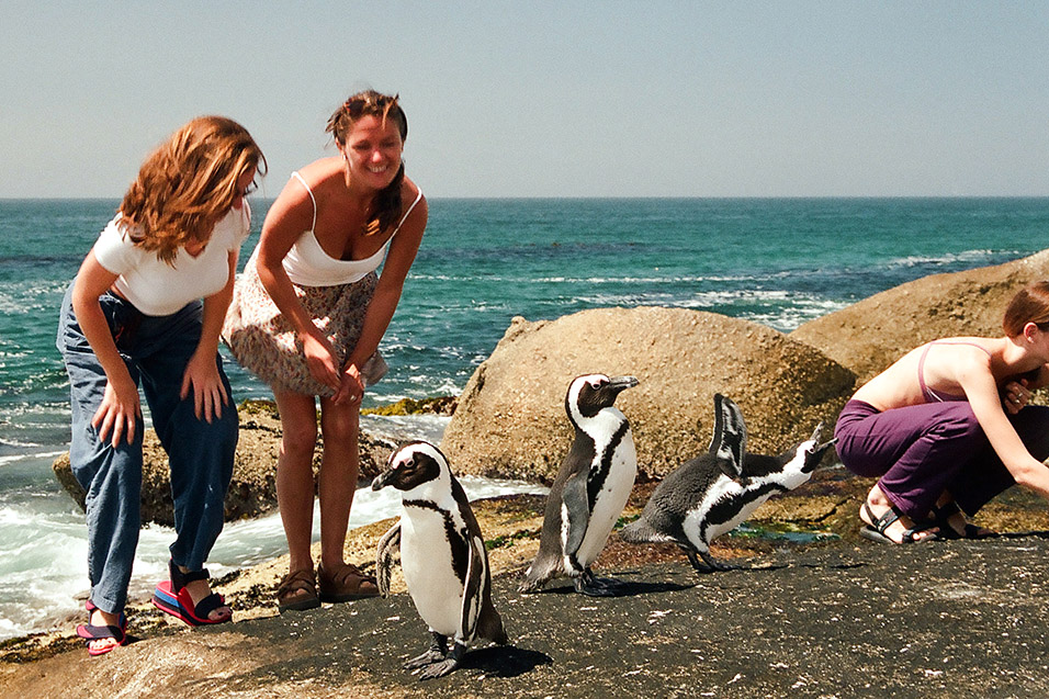 south_africa/penguins_stewardesses_5