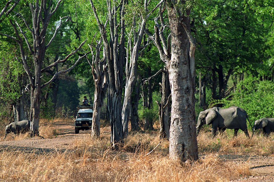 zambia/sl_luangwa_elephants_b_car_1