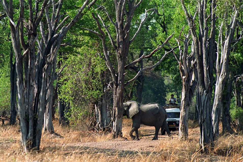 zambia/sl_luangwa_elephants_b_car_2