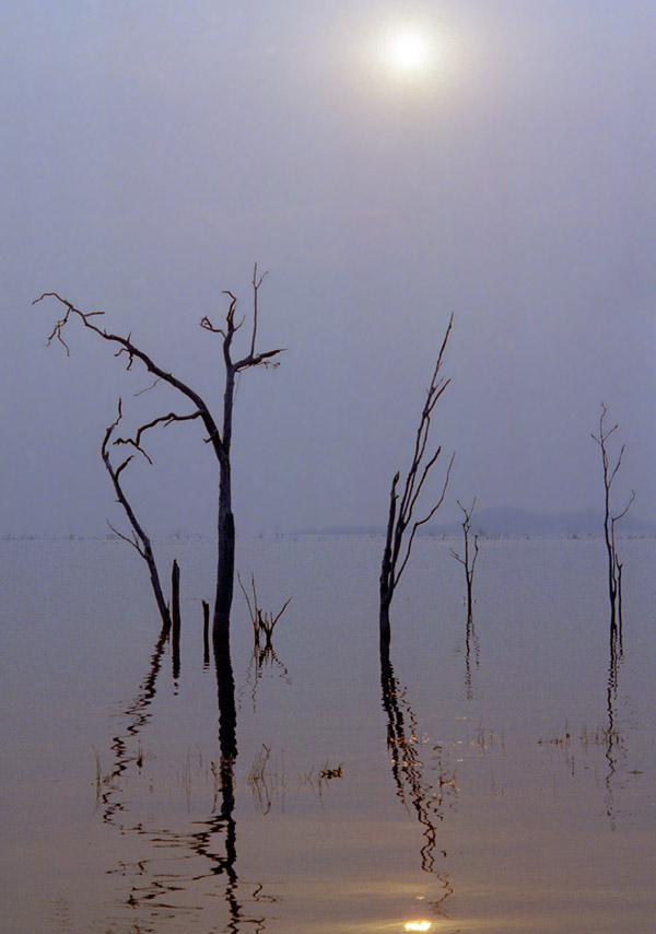 zimbabwe/matusadona_trees_in_water_vertical
